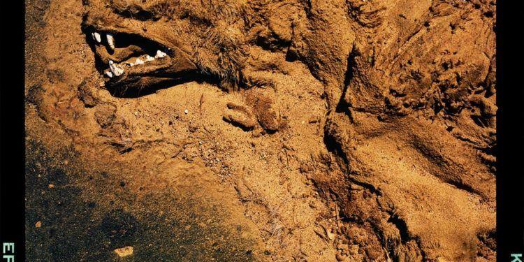 Rintintín después del ataque del comache Foto: Nelson Garrido